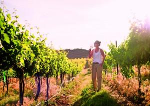 Vineyard Tasting
