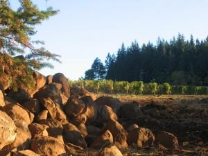 vineyard5