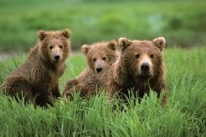 22473102_bears